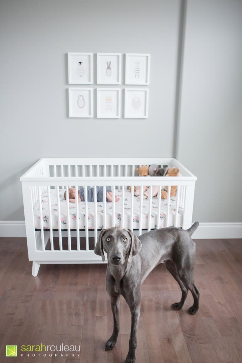 kingston newborn photography - sarah rouleau photography - Baby Norah-8