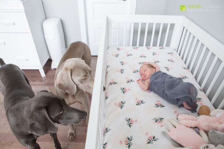 kingston newborn photography - sarah rouleau photography - Baby Norah-9